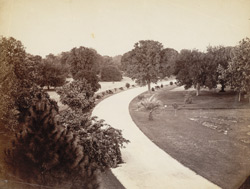 [View of footpath in] Rambagh, Umritsar.